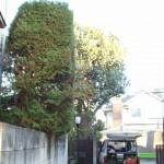 樹木整理の施工例